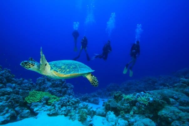 turtle underwater at red sea scuba diving at dahab egypt