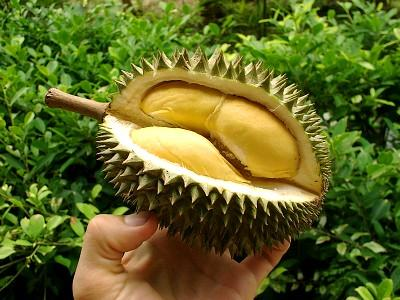 the lovely durian