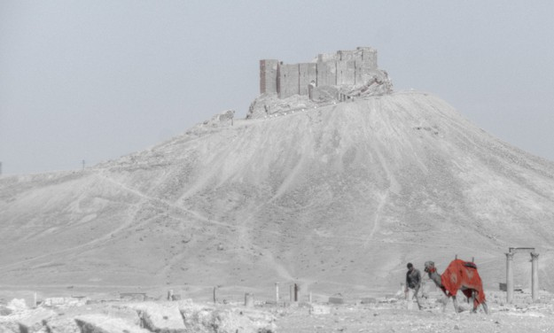 Palmyra Crusader Castle and Camel