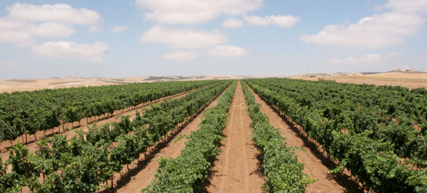 zumot winery jordan