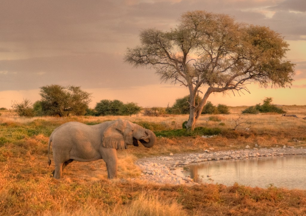 african elephant at watering hole namibia
