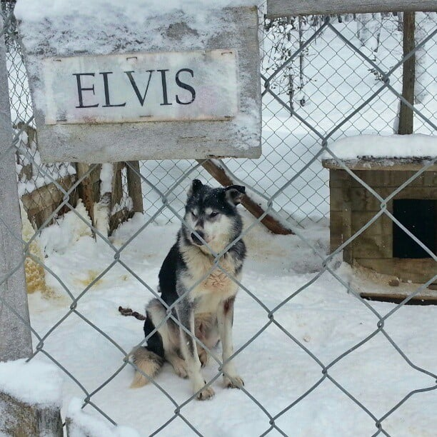 Elvis_has_NOT_left_the_building...._yet.__visitfinland