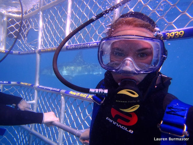 Cage diving with great white sharks in Australia