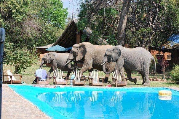 Elephants in South Luangwa