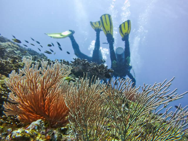 Reefs in the Panama