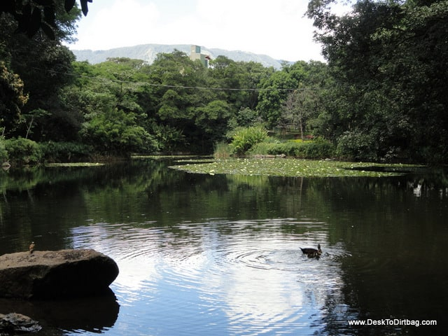 Large pond at the Botanical Garden where much of the wildlife congregates.