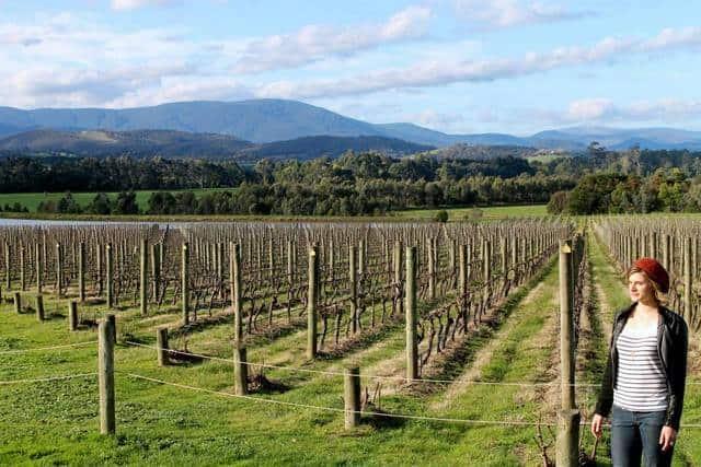 Wine Tasting in the Yarra Valley - Victoria, Australia