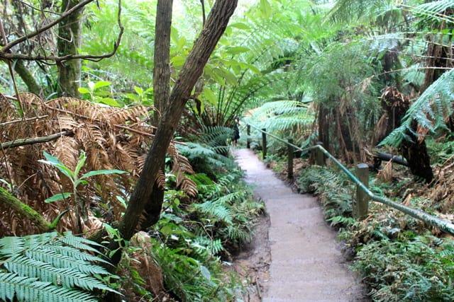 Ferntree Gully in Victoria, Australia