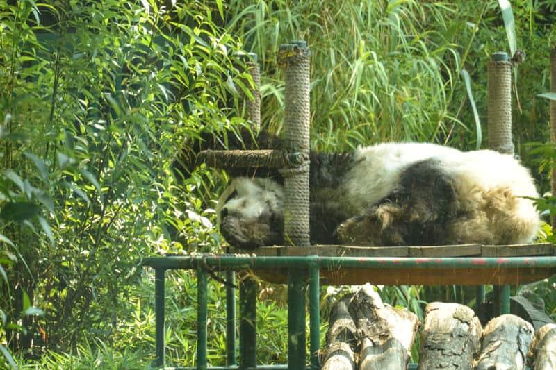 Mexico City Zoo