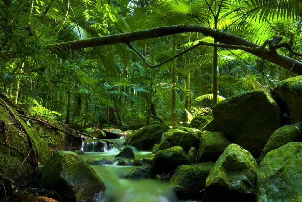 Daintree National Par