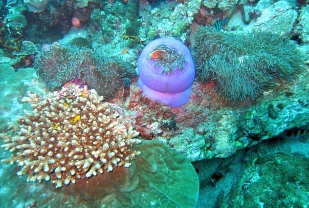 thailand underwater scuba blue plant