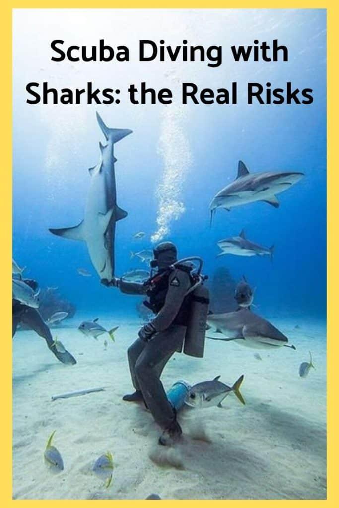 scuba diving with sharks danger