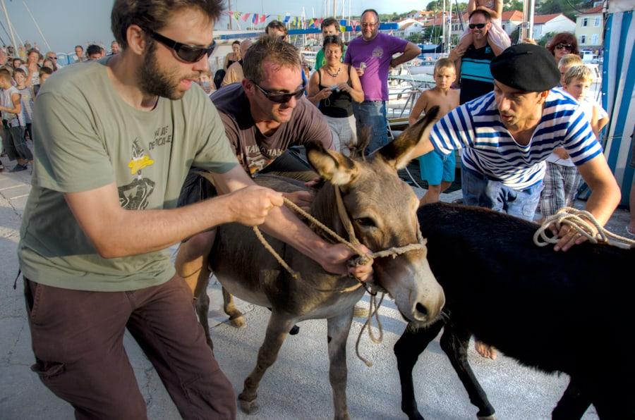 Sali Summer Festival Donkey Race in Croatia