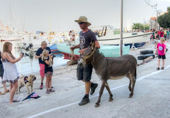 pre donkey race walk in sali