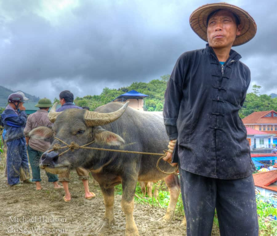 Hmong tribe man with cow in northern Vietnam