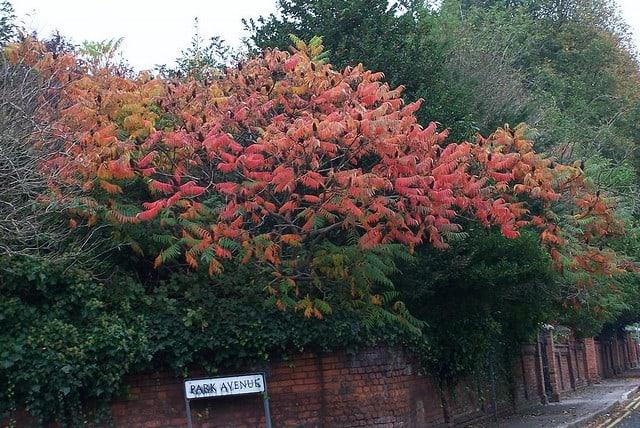 london Fire Tree from harry potter