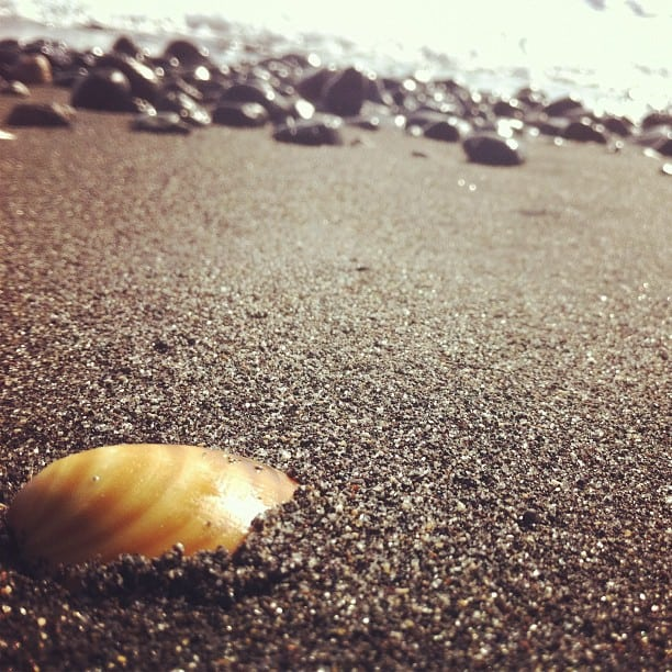santorini shell on the beach, greek beach