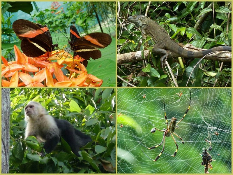 costa rican animals