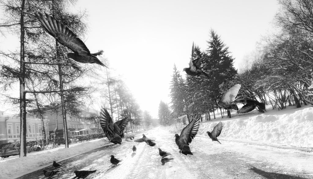 Birds Noir in Irkutsk, Russia