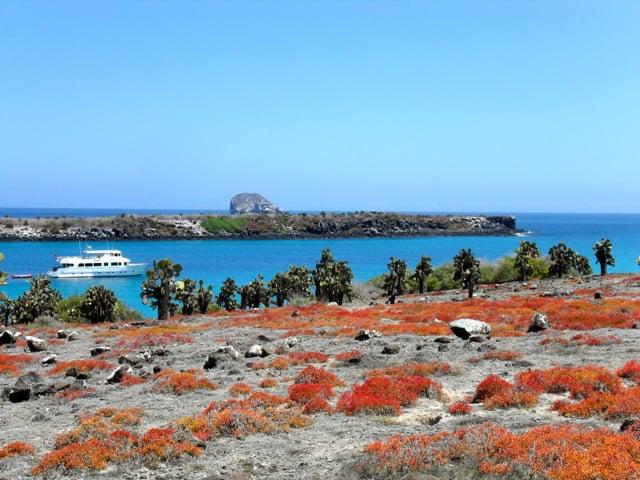 Plazas Island, Galapagos