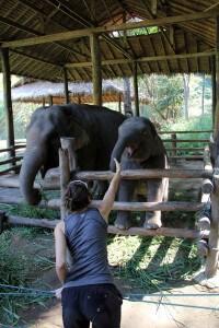 thailand3_babyelephant