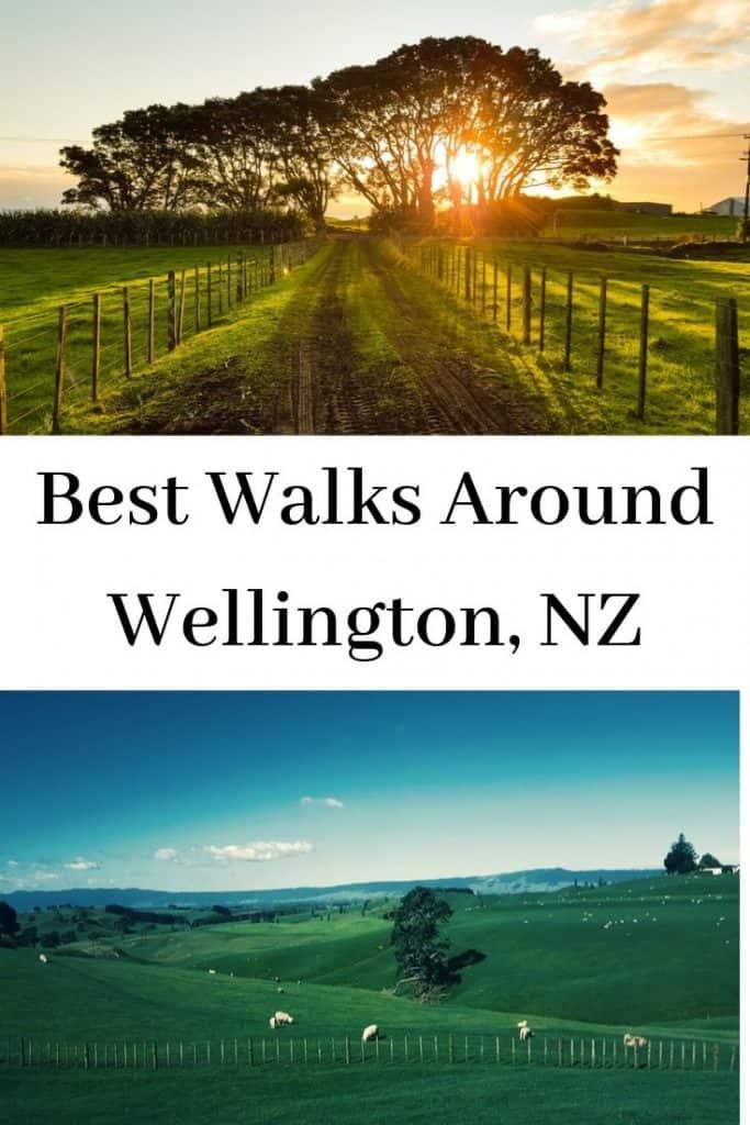 best walks around Wellington, NZ