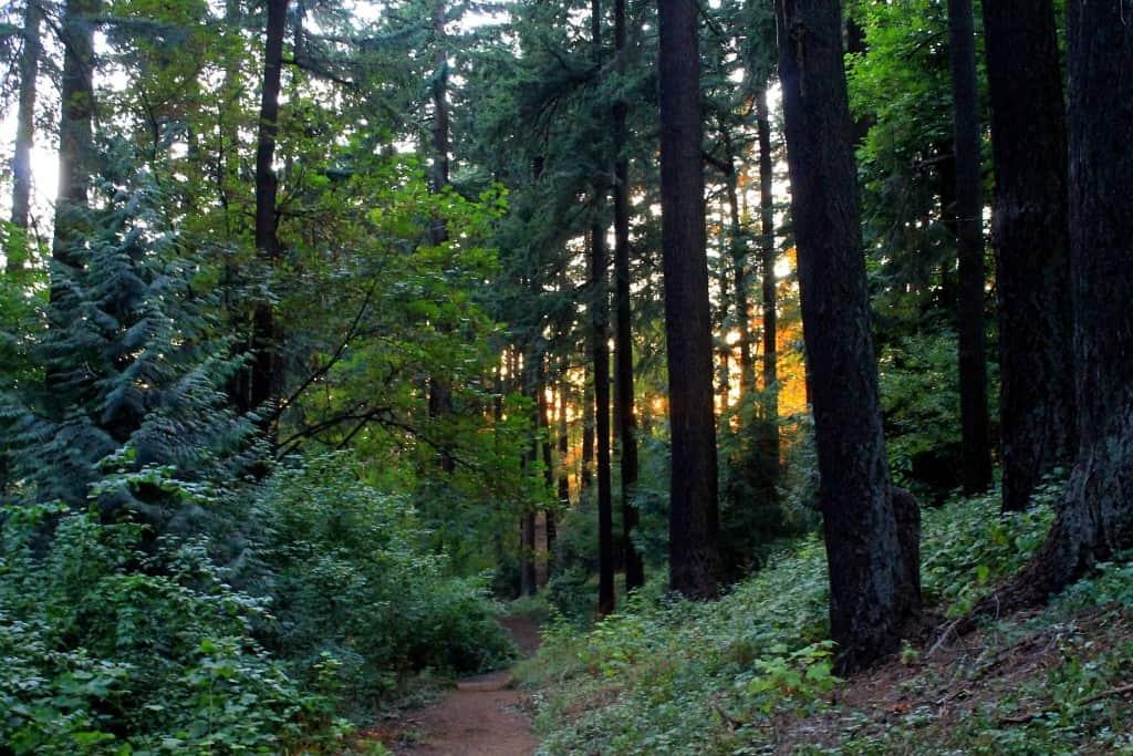Oregon - Pacific Northwest