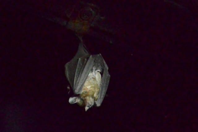 Monteverde Bat Museum (1)
