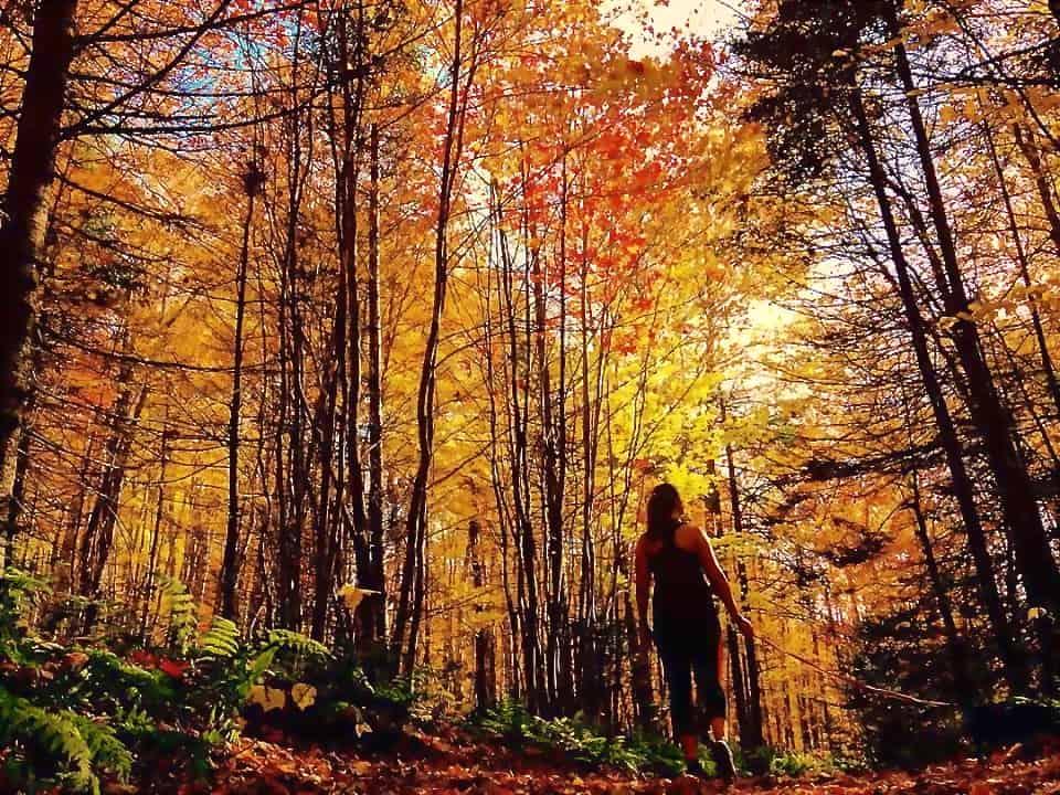 Bonshaw trails