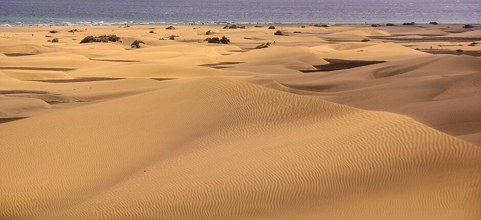 sand dunes of Maspalomas