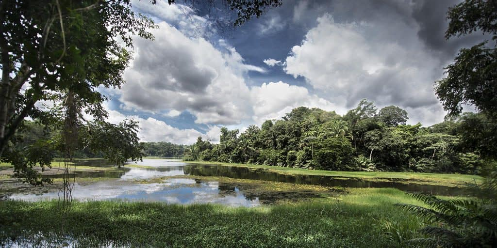 Best things to do in Panama: Soberania National Park