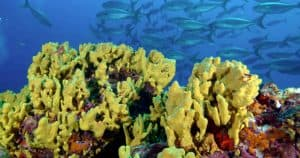 Things to do in Panama: Diving in Coiba_National_Marine_Park
