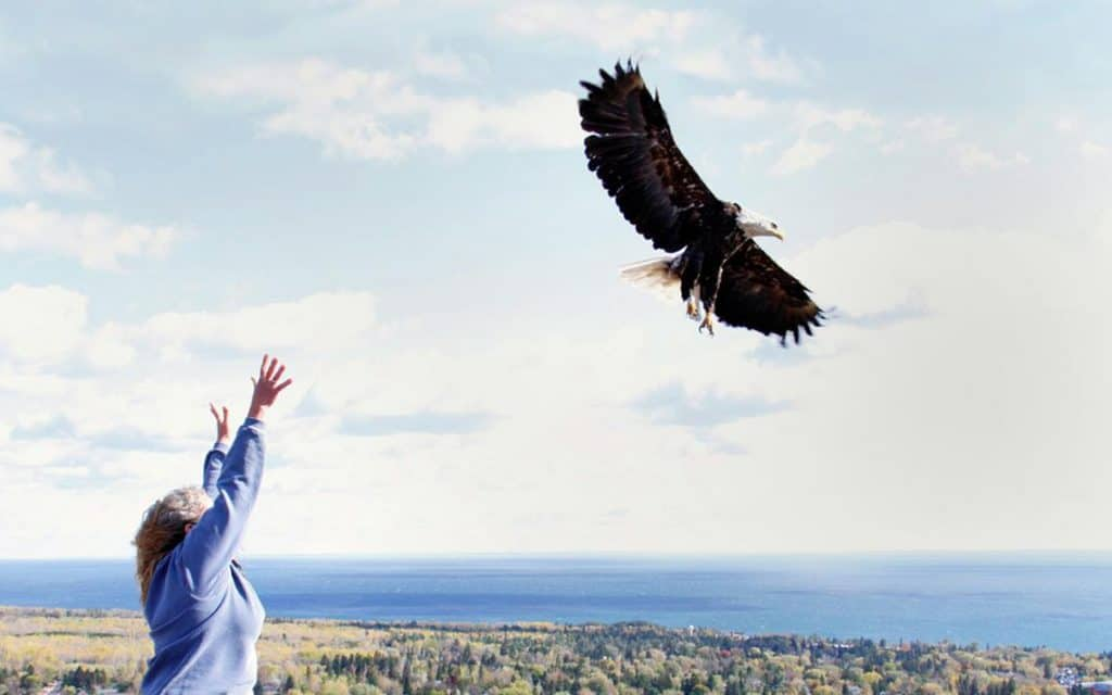 Fun Things to do in Duluth, MN: Hawk Ridge Bird Observatory