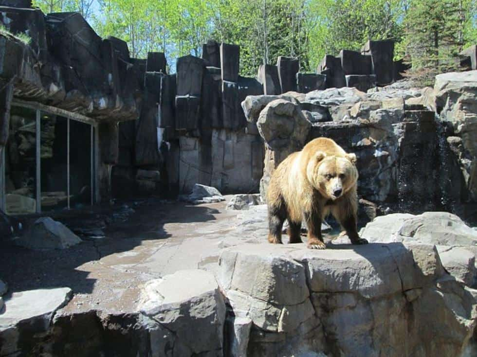 bear at Lake Superior Zoo